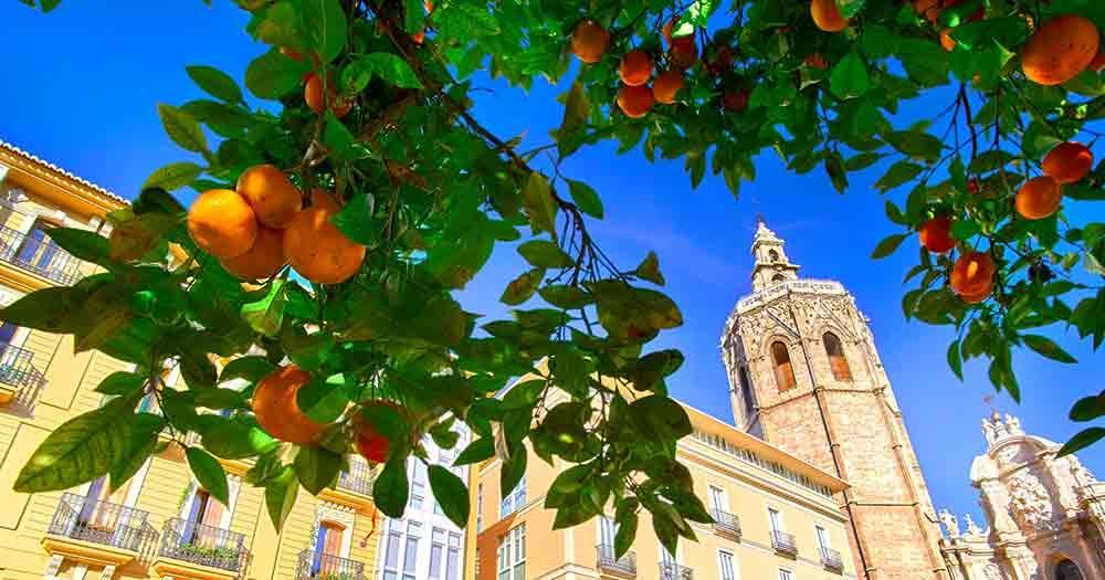 Valencia - architecture and orange tree