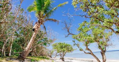 Fiji Islands - coconut palm