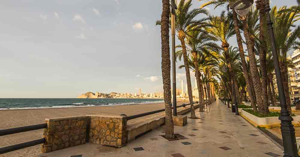 Costa Blanca - Palm trees