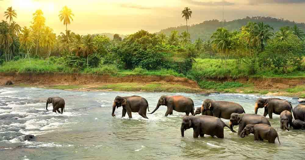 Sri Lanka - View of nature