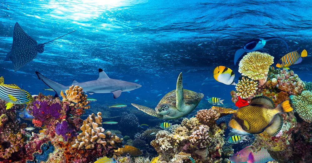 Maldives - Colorful underwater world