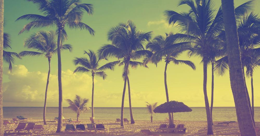 Virginia Beach - View to the palms